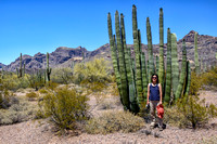 Organ Pipe Cactus National Monument - May 2015